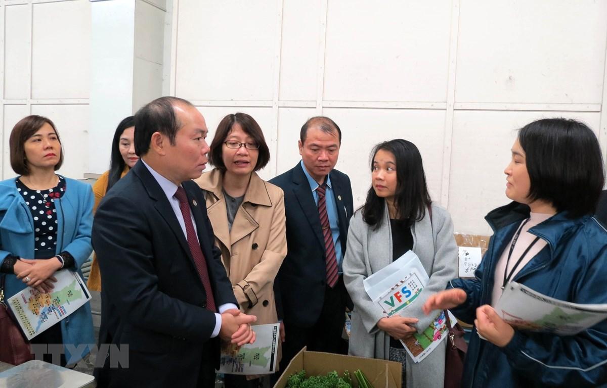 Chủ tịch Liên minh Hợp tác xã Việt Nam Nguyễn Ngọc Bảo tham quan tại hợp tác xã nông nghiệp tại tỉnh Ibaraki, Nhật Bản. (Ảnh: Thành Hữu/TTXVN)
