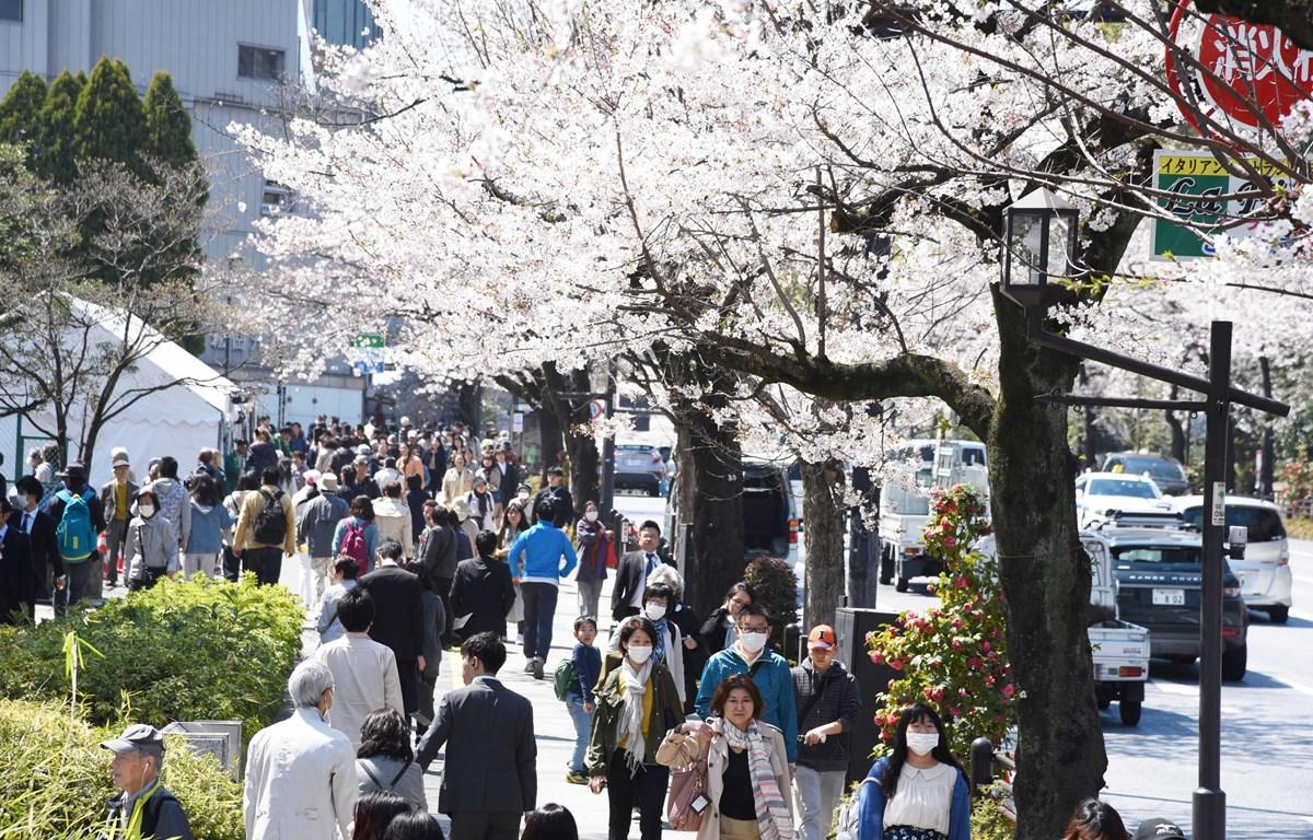 Khách du lịch tản bộ dưới những cây hoa Anh Đào trên con đường gần đền Yasukuni, Tokyo. (Ảnh: Thành Hữu/TTXVN)