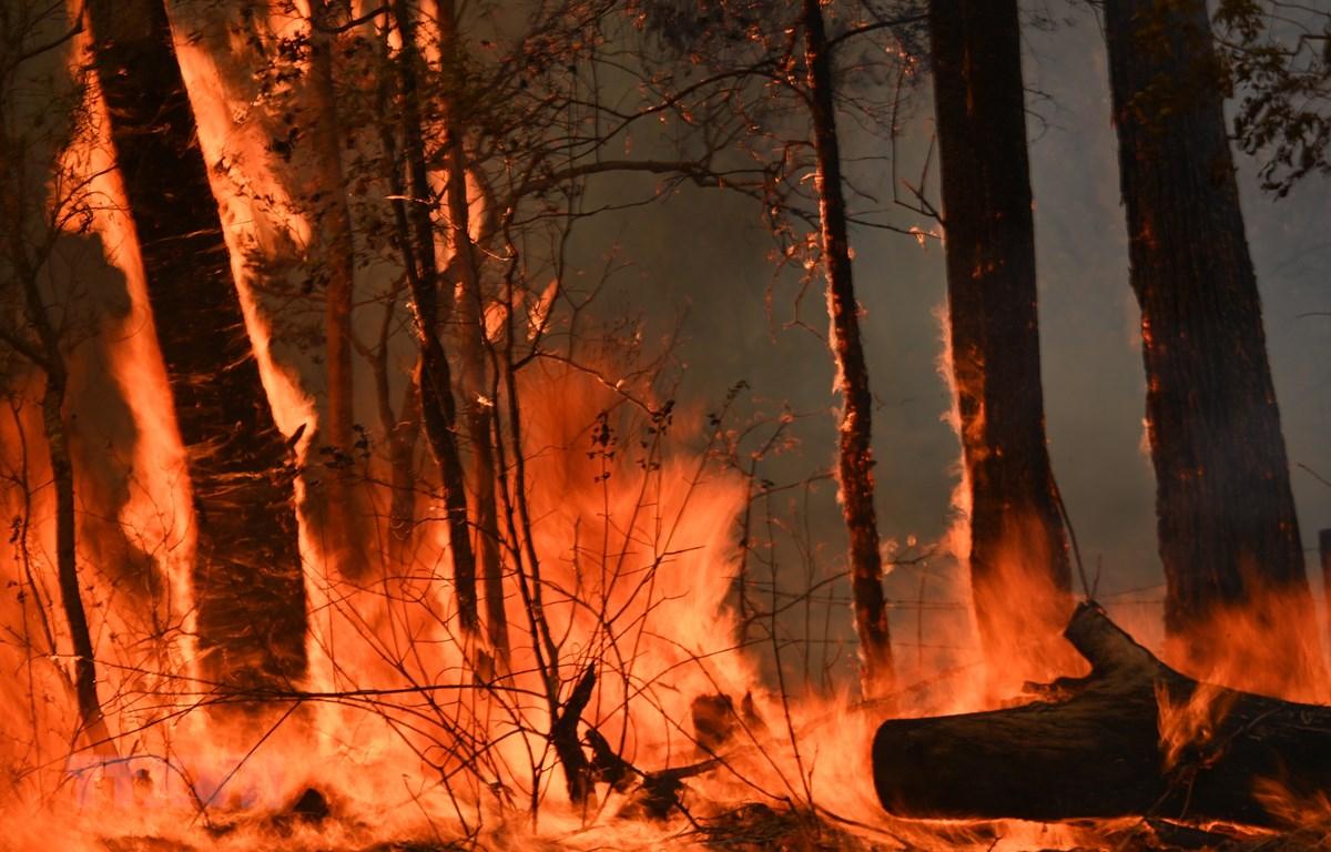 Các đám cháy rừng lan rộng tại Hillsville, cách Sydney, Australia, khoảng 350km về phía bắc ngày 12/11. (Ảnh: AFP/TTXVN)