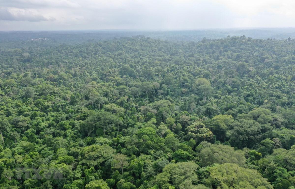 Quang cảnh rừng Omo ở Lagos, Nigeria, ngày 12/6/2019. (Ảnh: AFP/TTXVN)