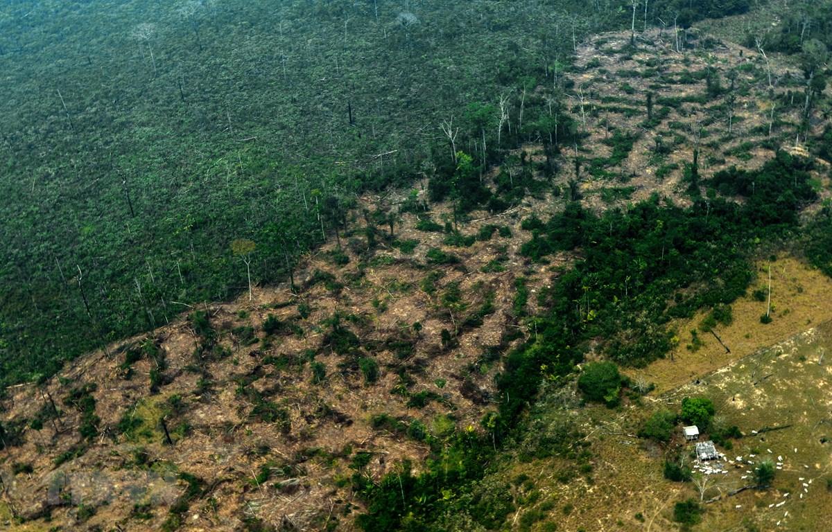 Một khoảng rừng mưa Amazon ở bang Amazonas, Brazil bị cháy rụi ngày 24/8/2019. (Ảnh: AFP/TTXVN)