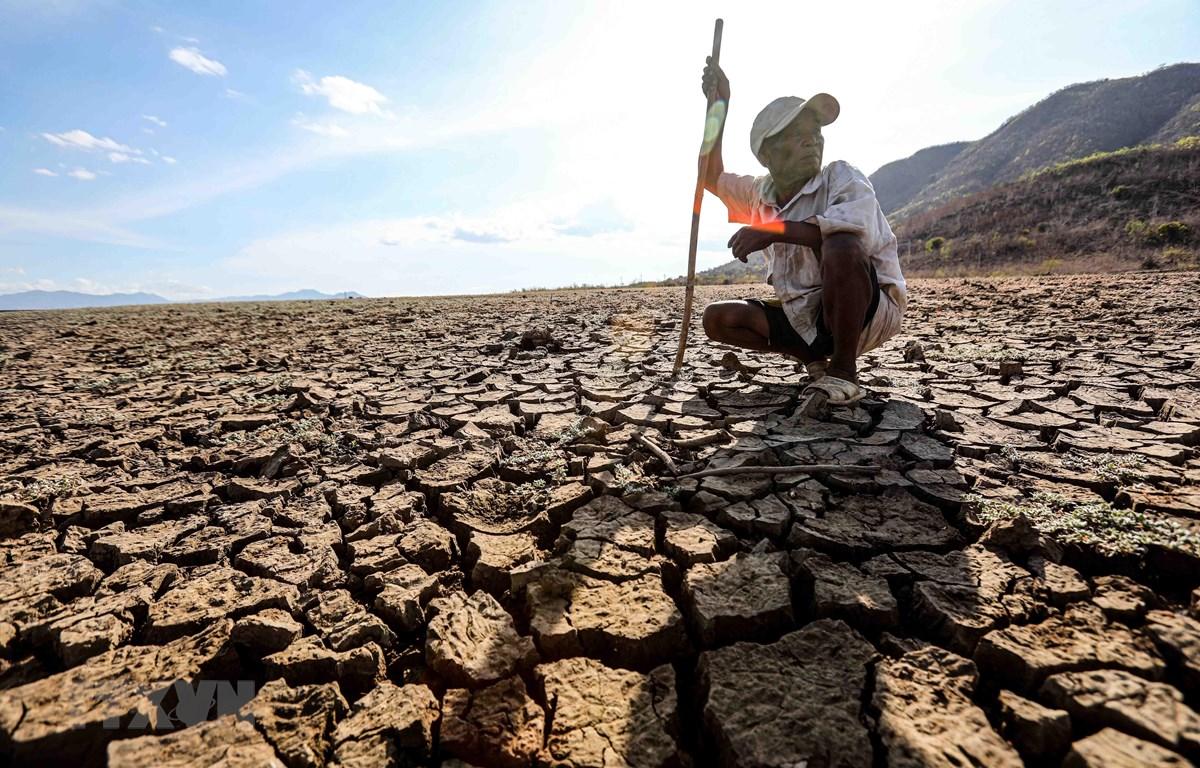 Một nông dân nơi vùng hạn Ninh Thuận bất lực trước hạn hán kéo dài. (Ảnh: TTXVN)