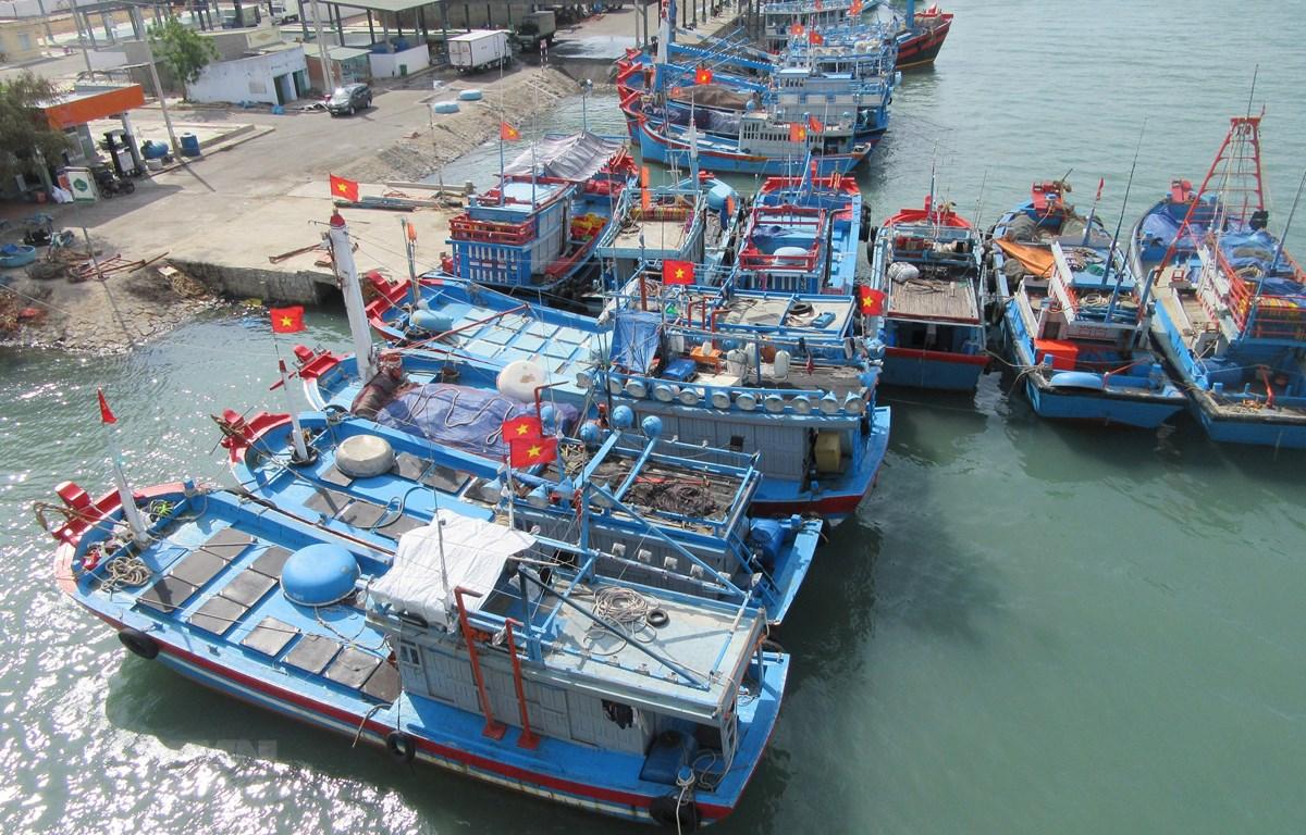 Tàu cá khai thác xa bờ neo đậu tại cảng cá Ninh Chữ (huyện Ninh Hải, Ninh Thuận). (Ảnh: Nguyễn Thành/TTXVN)
