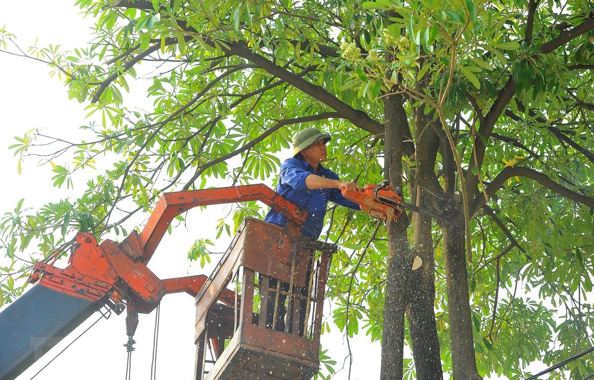 dịch vụ cắt tỉa cây xanh tphcm