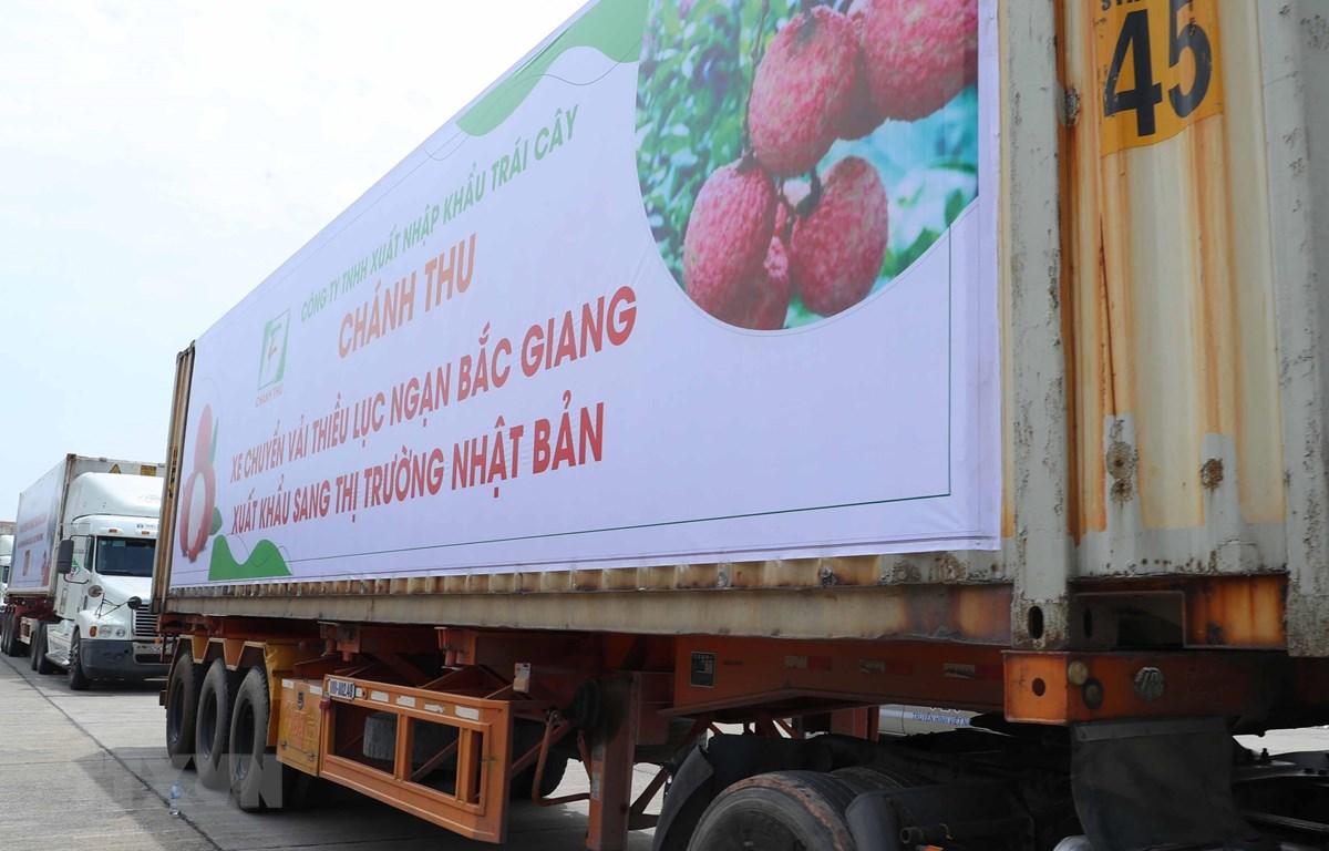 Lô hàng vải thiều đầu tiên của Việt Nam đã có mặt tại thị trường Nhật Bản. (Ảnh: Thống Nhất/TTXVN)