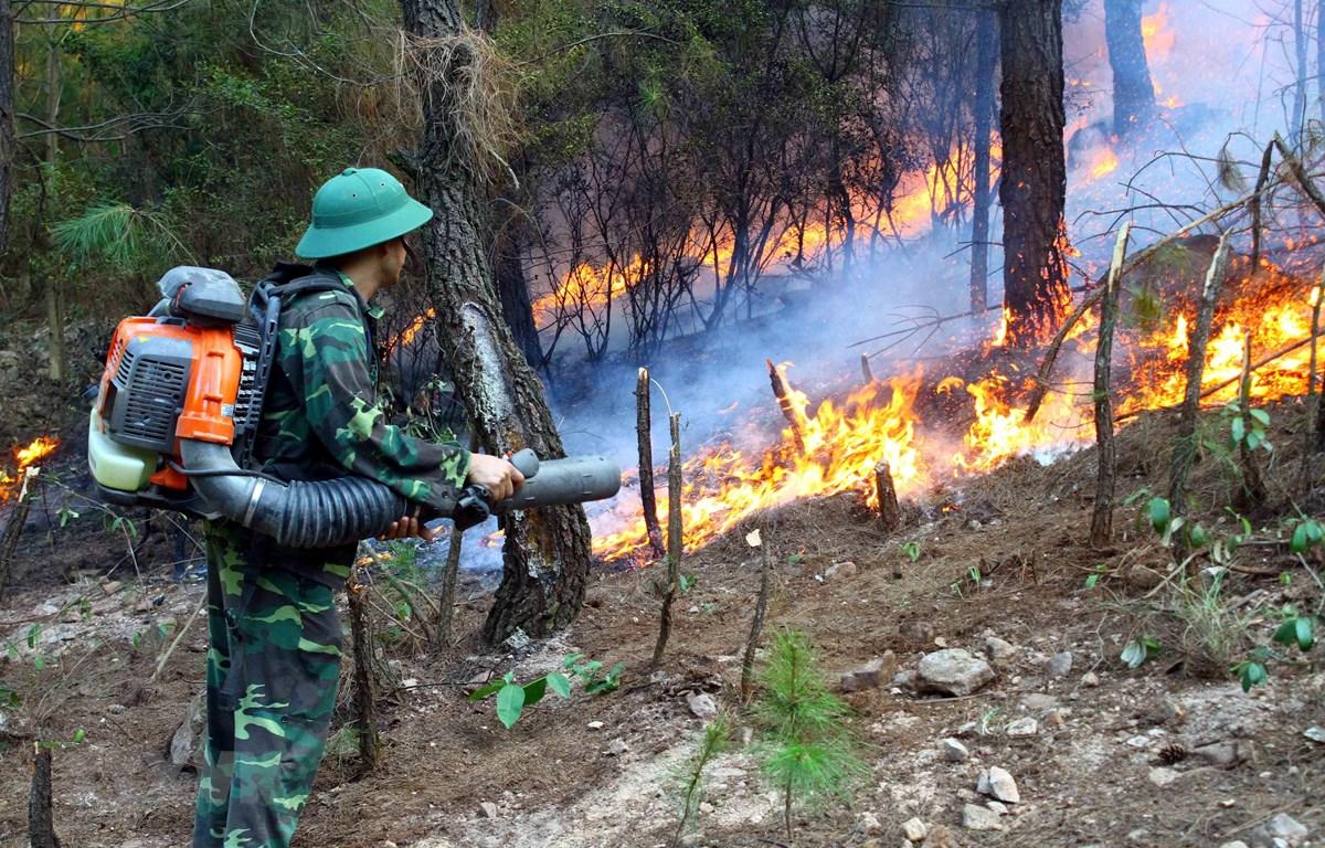 Các lực lượng chức năng nỗ lực dập lửa tại xã Diễn Lợi, huyện Diễn Châu ngày 28/6.( Ảnh: Tá Chuyên/TTXVN)