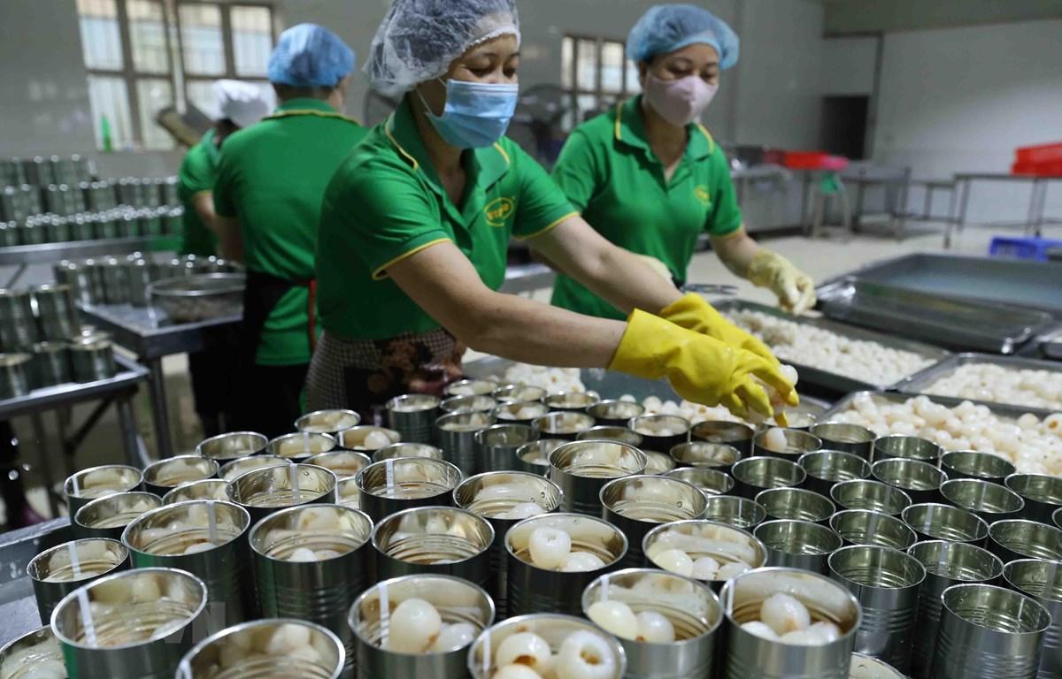 Chiến biến vải thiều tươi xuất khẩu tại Công ty CP Xuất nhập khẩu Vifoco. (Ảnh: Vũ Sinh/TTXVN)