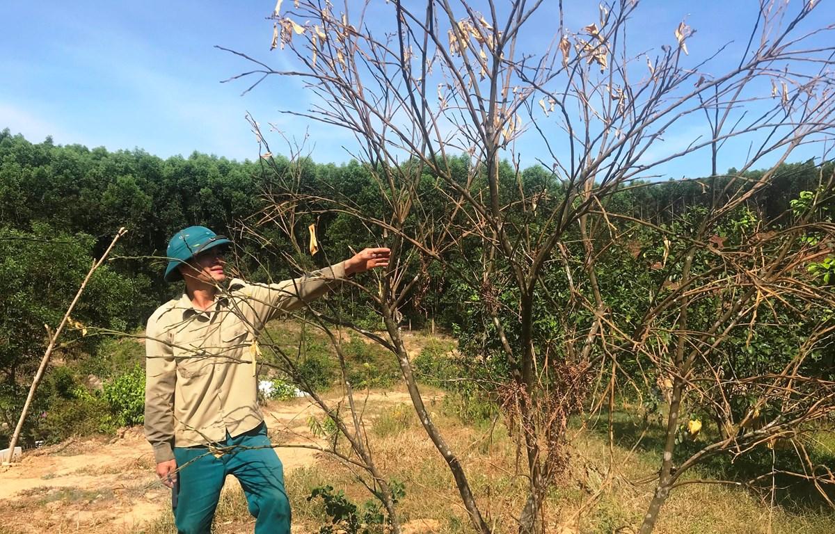 Nắng hạn kéo dài ảnh hưởng nghiêm trọng đến sản xuất và sinh hoạt của người dân Hà Tĩnh. (Ảnh: Hoàng Nga/TTXVN)