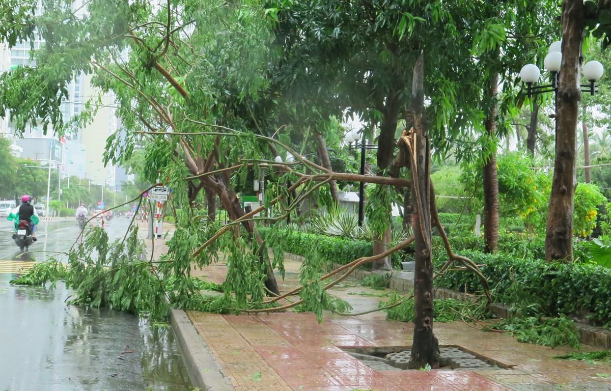Cây xanh bị gãy tại thành phố Nha Trang, Khánh Hòa do ảnh hưởng trực tiếp của bão. (Ảnh: Phan Sáu/TTXVN)