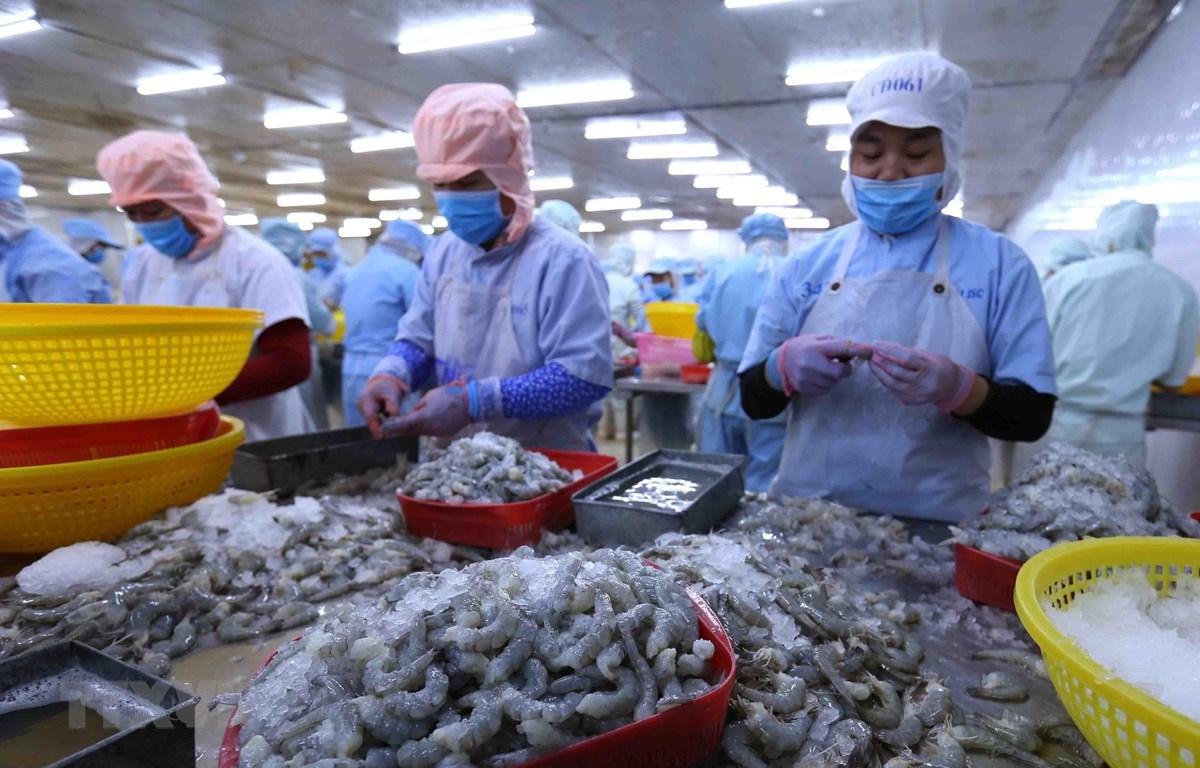 Chế biến tôm xuất khẩu tại nhà máy của Công ty CP Bá Hải (tỉnh Phú Yên). (Ảnh: Vũ Sinh/TTXVN)
