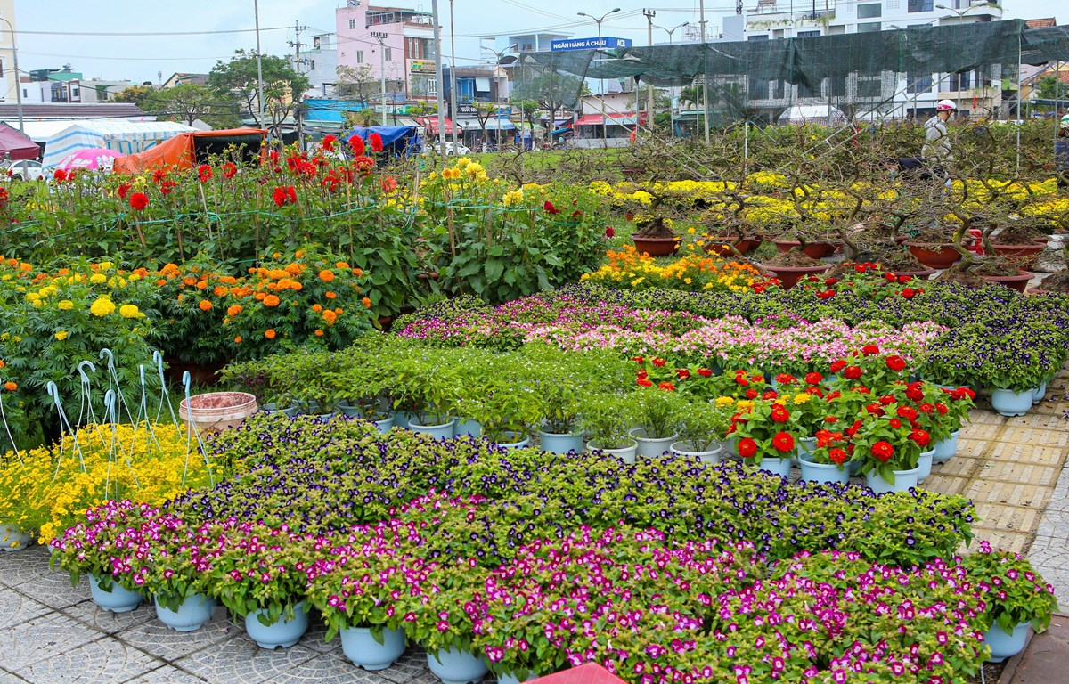 Hoa cây cảnh bày bán nhiều nhưng thưa vắng khách mua. (Ảnh: Trần Lê Lâm/TTXVN)