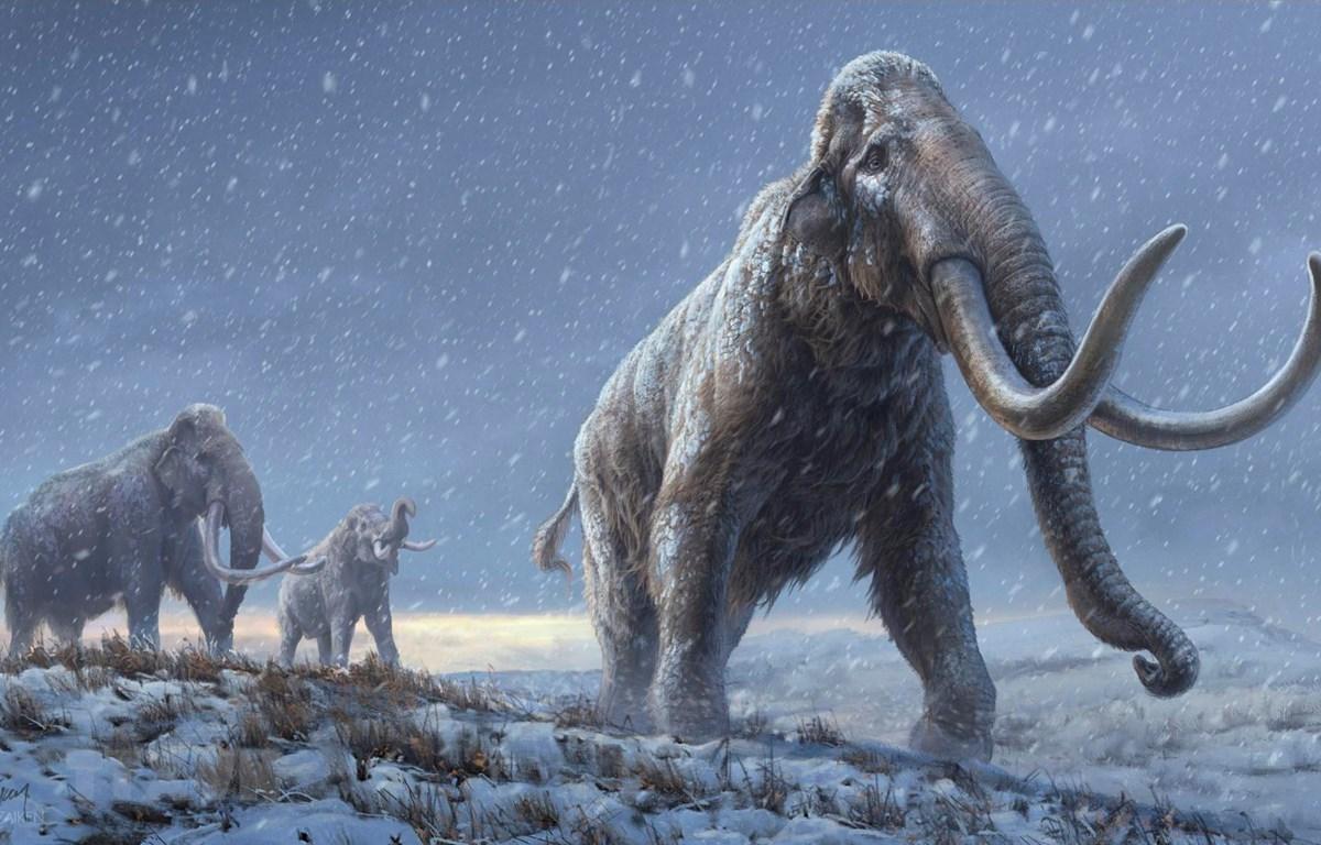 Hình ảnh phục dựng voi ma mút thảo nguyên do tạp chí Nature công bố ngày 17/2/2021. (Ảnh: AFP/TTXVN)