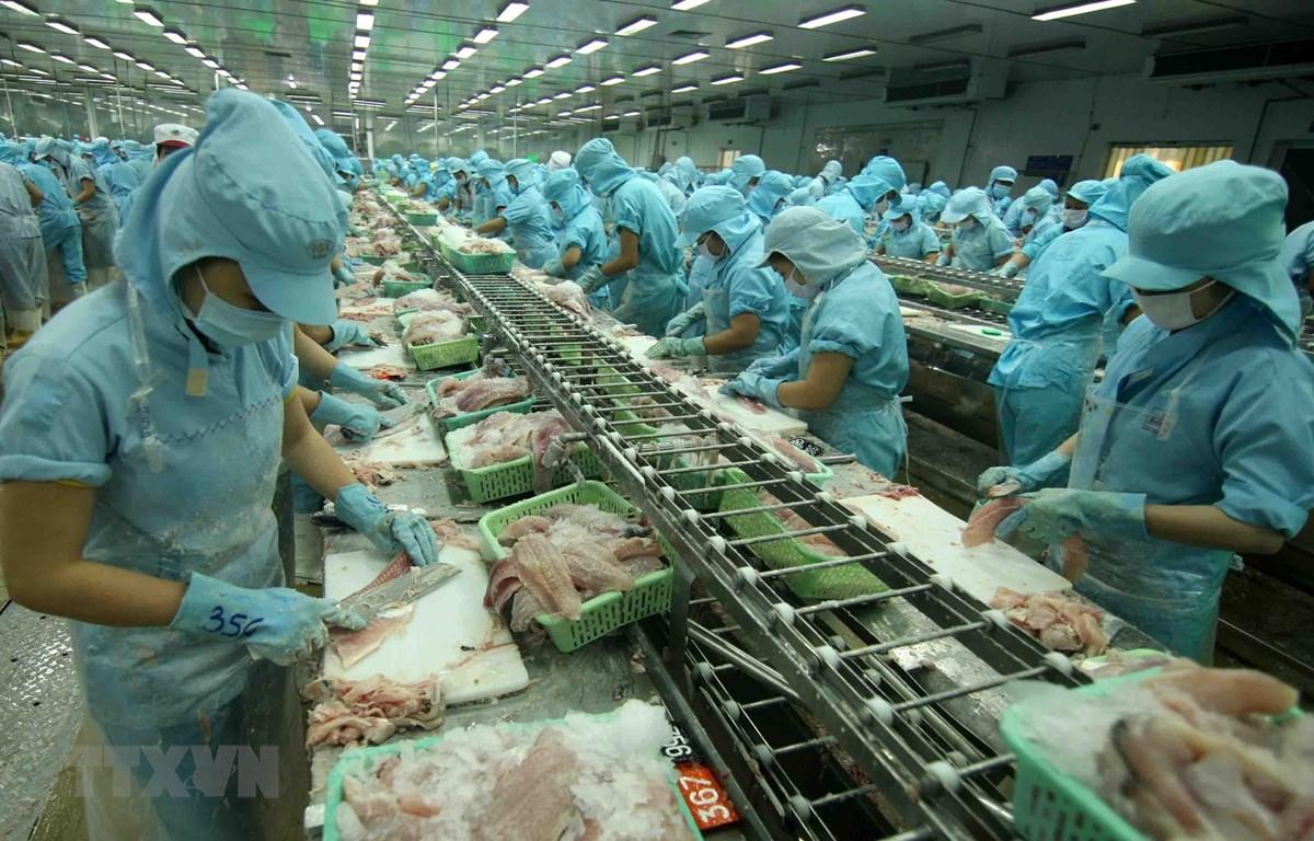 Chế biến cá tra xuất khẩu tại nhà máy của Tập đoàn Sao Mai, tỉnh Đồng Tháp. (Ảnh: Vũ Sinh/TTXVN)