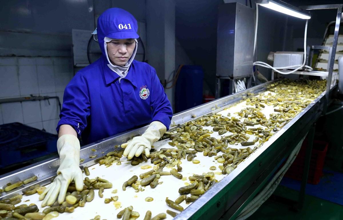 Dây chuyền đóng lọ dưa chuột xuất khẩu của Công ty CP chế biến thực phẩm xuất khẩu GOC, Bắc Giang. (Ảnh: Vũ Sinh/TTXVN)