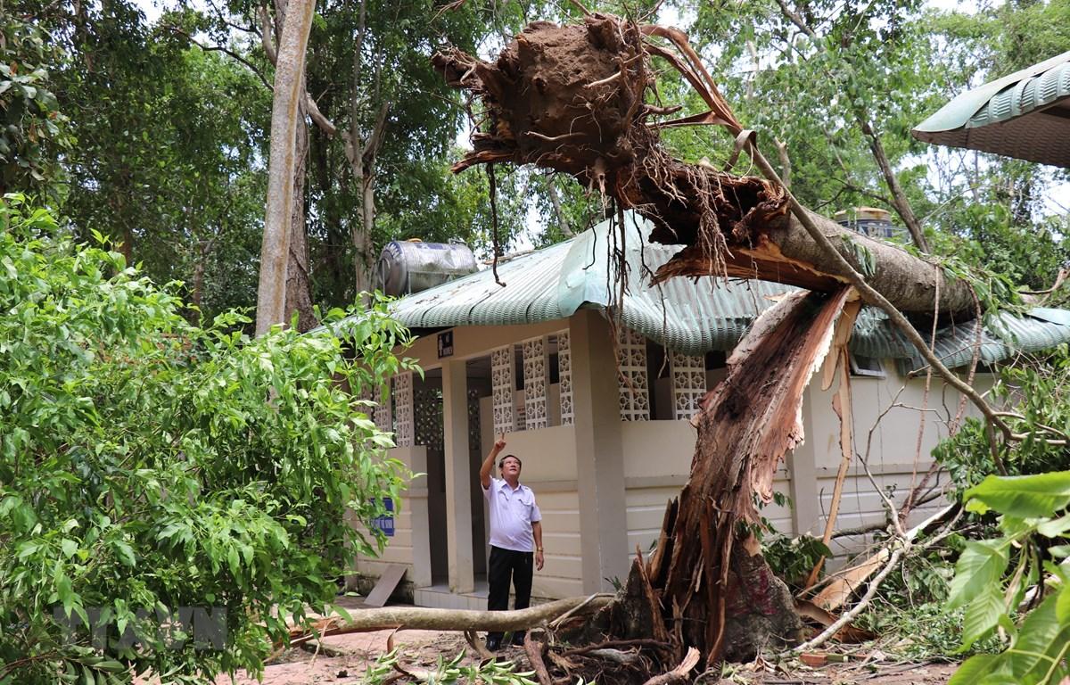 Một cây cổ thụ trong Khu di tích bị ngã đổ. (Ảnh: Lê Đức Hoảnh/TTXVN)