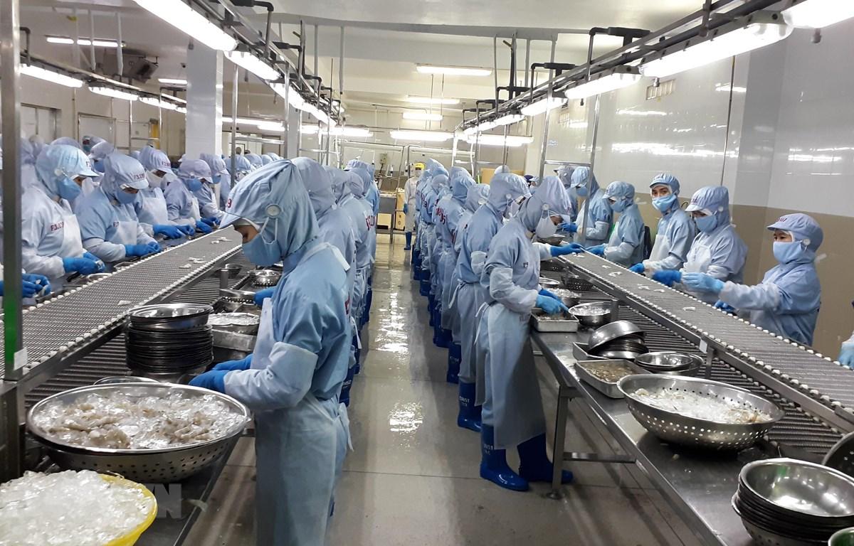 Chế biến tôm đông lạnh xuất khẩu tại Công ty cổ phần Thủy sản Thông Thuận Cam Ranh, tỉnh Khánh Hòa. (Ảnh: Phan Sáu/TTXVN)
