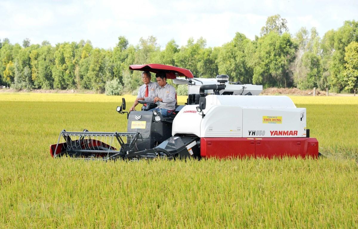 Công ty Cổ phần Tập đoàn Lộc Trời thu hoạch lúa trong vùng nguyên liệu tại xã Định Thành, (Thoại Sơn, An Giang). (Ảnh: Công Mạo/TTXVN)