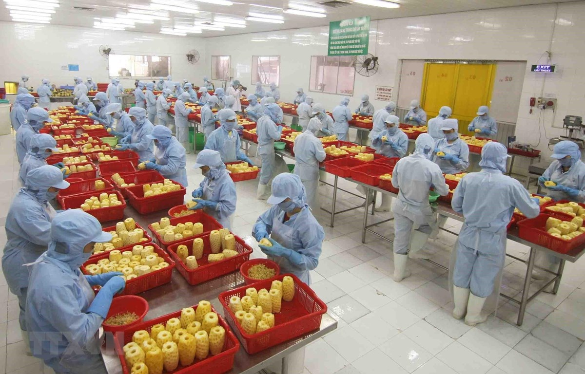 Chế biến sản phẩm dứa đóng hộp tại nhà máy của Công ty CP xuất nhập khẩu nông sản An Giang. (Ảnh: Vũ Sinh/TTXVN)
