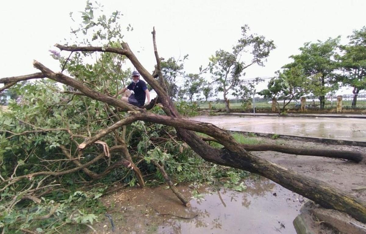 Lốc xoáy khiến nhiều cây cối tại xã An Vũ (huyện Quỳnh Phụ, Thái Bình) gãy đổ. (Nguồn: TTXVN phát)