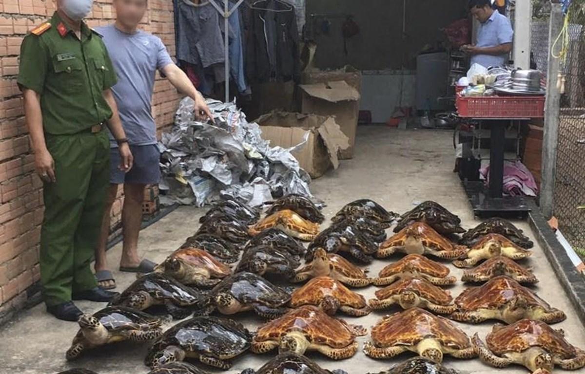 39 tiêu bản rùa biển thu giữ được trong vụ án (Ảnh: Phòng Cảnh sát môi trường Công an tỉnh Tây Ninh)