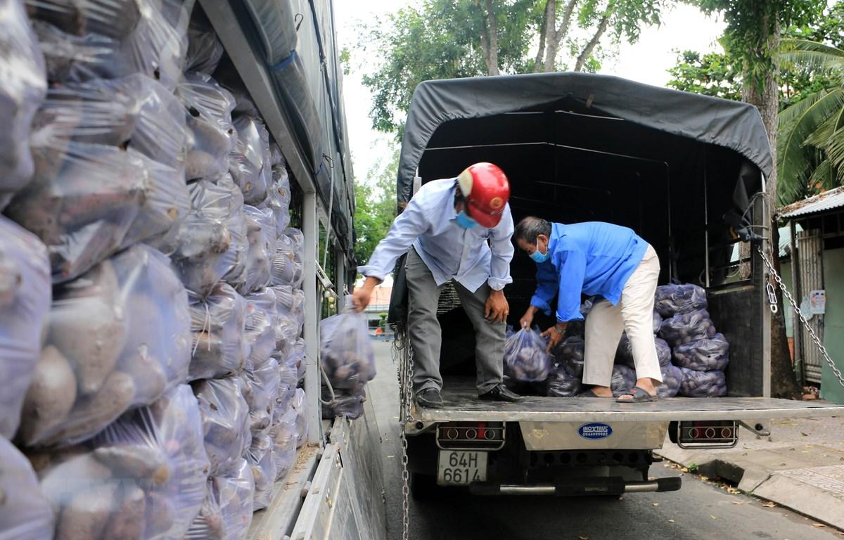 Hội Chữ thập đỏ thành phố Vĩnh Long chung tay tiêu thụ khoai lang tím Nhật của nông dân huyện Bình Tân. (Ảnh: Phạm Minh Tuấn/TTXVN)