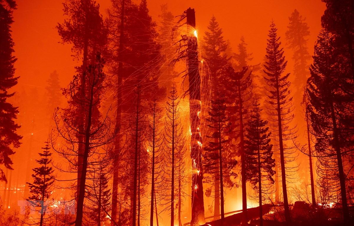 """Lính cứu hoả Mỹ nỗ lực dập lửa cháy rừng ngùn ngụt tại """"giặc lửa"""" Twin Bridges, bang California, ngày 29/8/2021. (Ảnh: AFP/TTXVN)"""