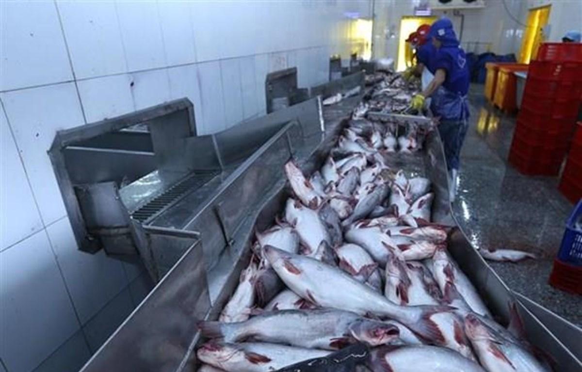 Chế biến cá tra xuất khẩu tại Công ty TNHH Công nghiệp Thủy sản Miền Nam. (Ảnh: TTXVN)