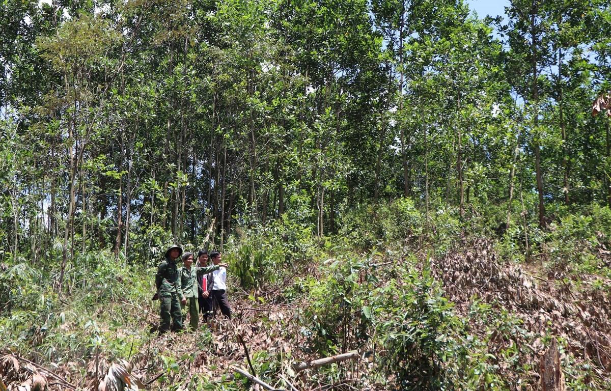 Rẫy của dân làng Tu Rét xã Đăk Nên huyện Kon Plông (Kon Tum) bị thu hồi và cấp cho dân làng Xô Luông, Vương sản xuất vẫn chưa nhận được tiền đền bù. (Ảnh: Cao Nguyên/TTXVN)