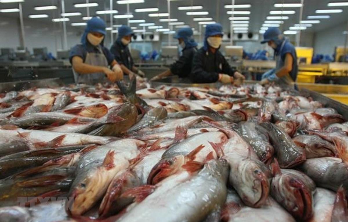 Thủy sản là một trong các mặt hàng xuất khẩu tăng trưởng mạnh nhất của Việt Nam trong những năm đổi mới. (Ảnh: Huy Hùng/TTXVN)