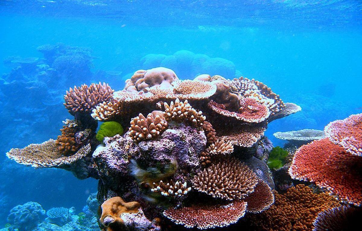 Quần thể san hô Great Barrier đang bị đe dọa từ việc tẩy trắng san hô và thiệt hại từ sao biển có gai. (Nguồn: thepurplepassport)