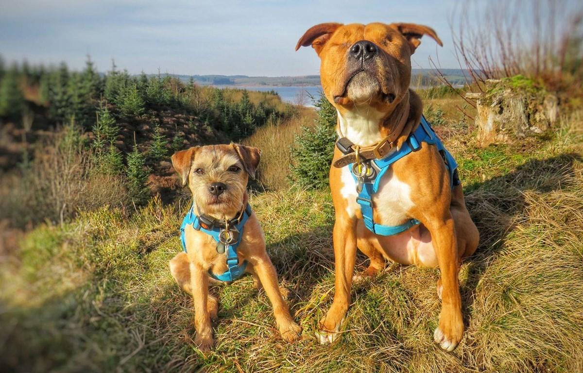 """Chú chó mù Amos (bên phải) và """"vệ sỹ"""" Toby. (Nguồn: news.sky)"""