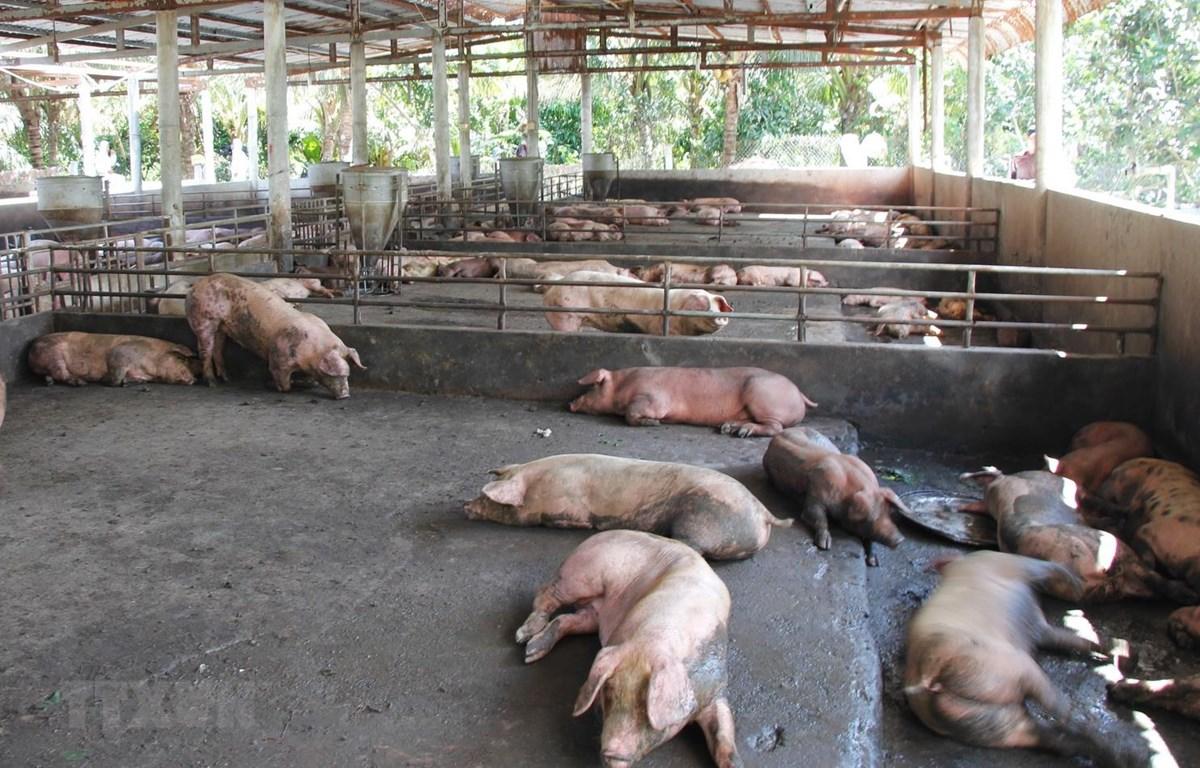 TP.HCM bảo đảm nguồn cung thịt lợn an toàn cho người tiêu dùng ...