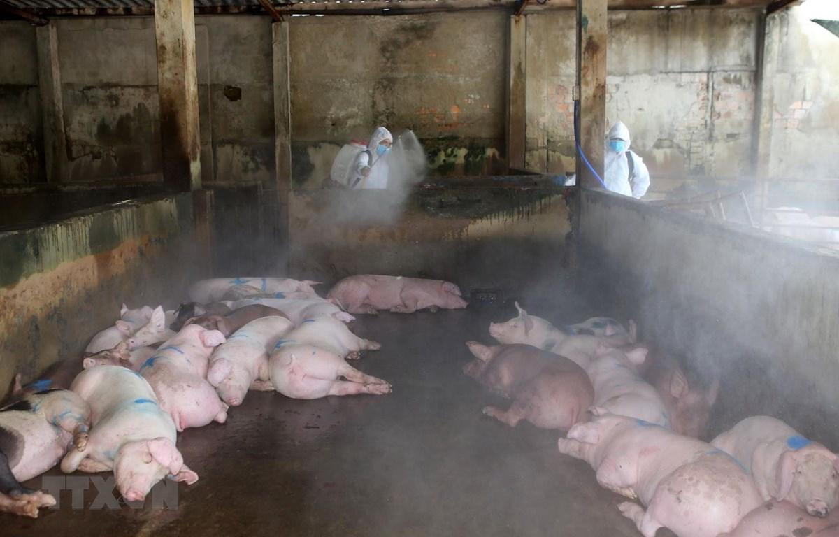 Nhân viên Thú y tỉnh Thừa Thiên-Huế phun thuốc tiêu độc khử trùng tại khu vực lò giết mổ lợn tập trung Bãi Dâu, thành phố Huế. (Ảnh: Hồ Cầu/TTXVN)