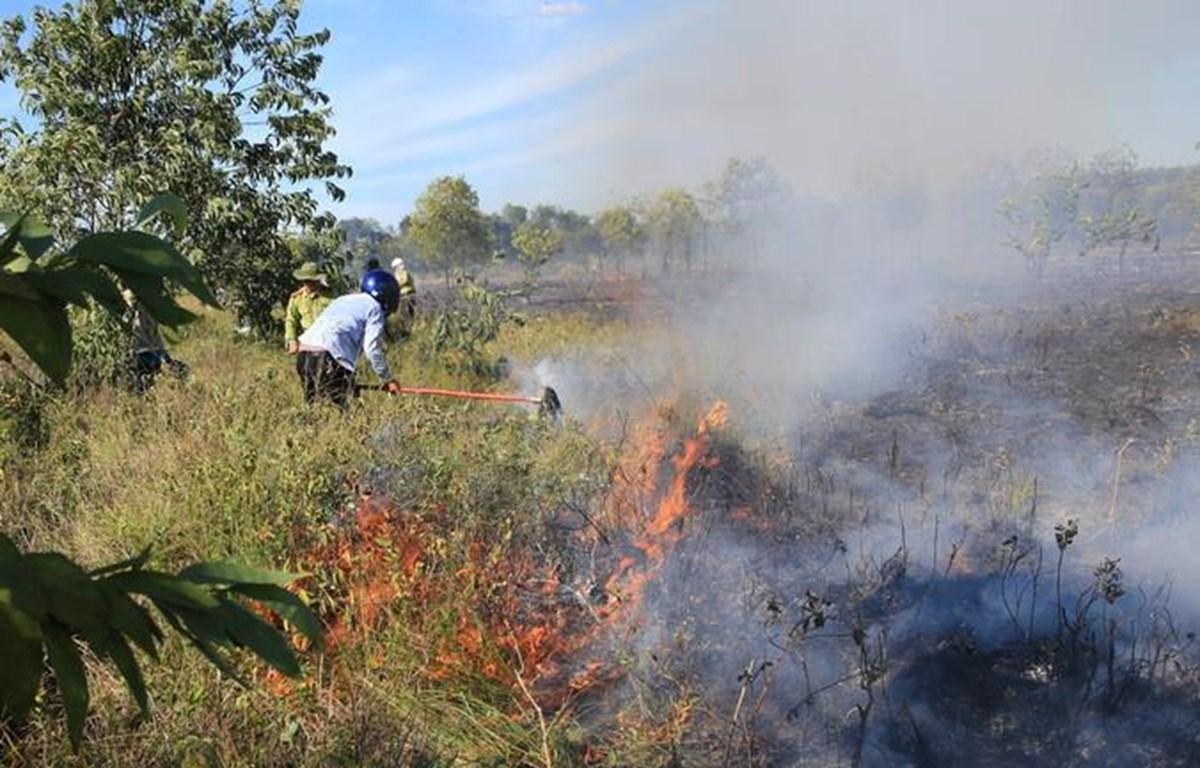 Người dân và các lực lượng đang tham gia chữa cháy tại Quảng Điền, Thừa Thiên Huế (Ảnh: Hồ Cầu/TTXVN)