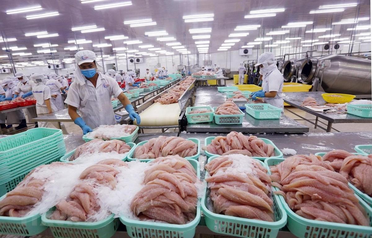 Chế biến cá tra xuất khẩu tại Công ty Cổ phần xuất nhập khẩu Thủy sản Cần Thơ. (Ảnh: Danh Lam/TTXVN)