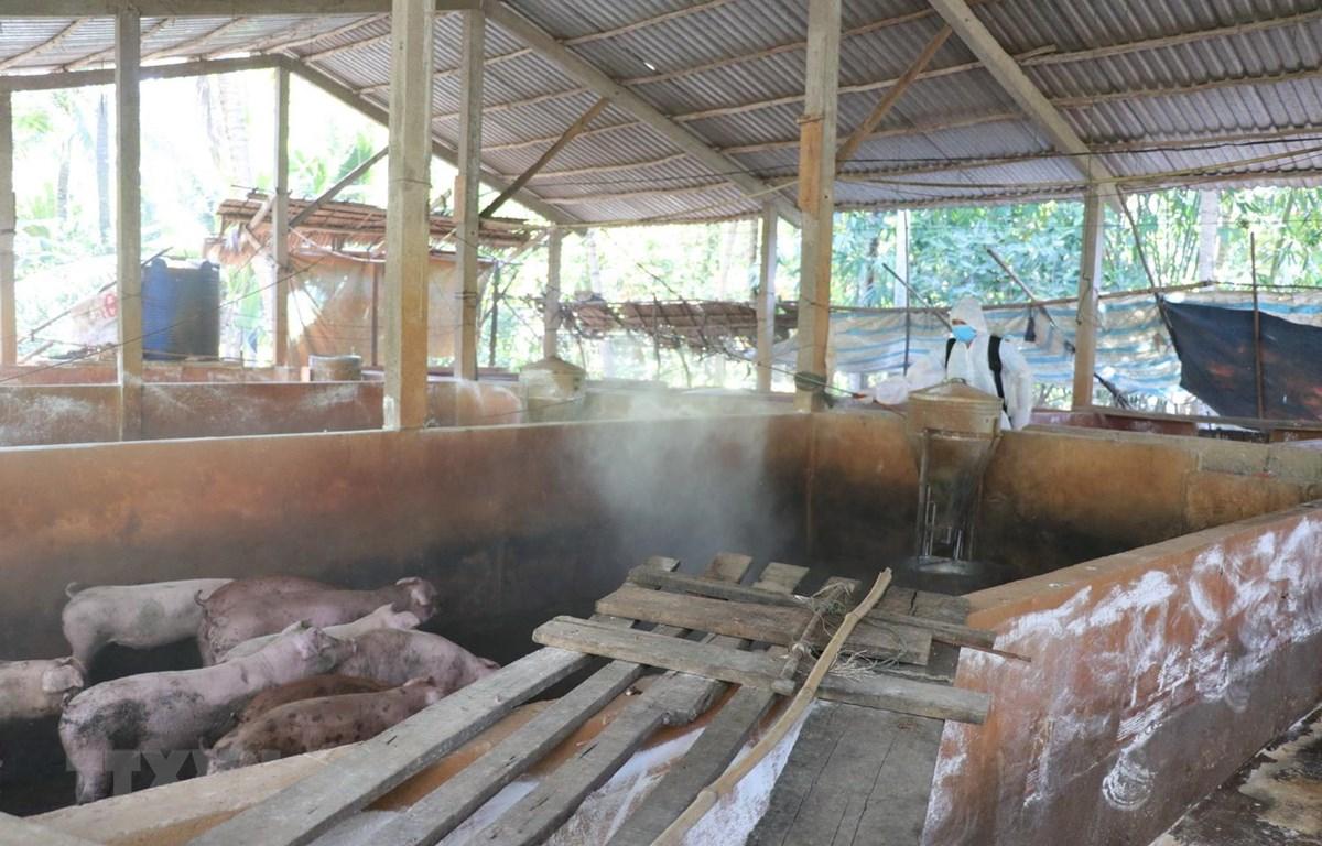 Tổ chức phun xịt thuốc khử trùng tại các trang trại chăn nuôi. (Ảnh: Huỳnh Phúc Hậu/TTXVN)