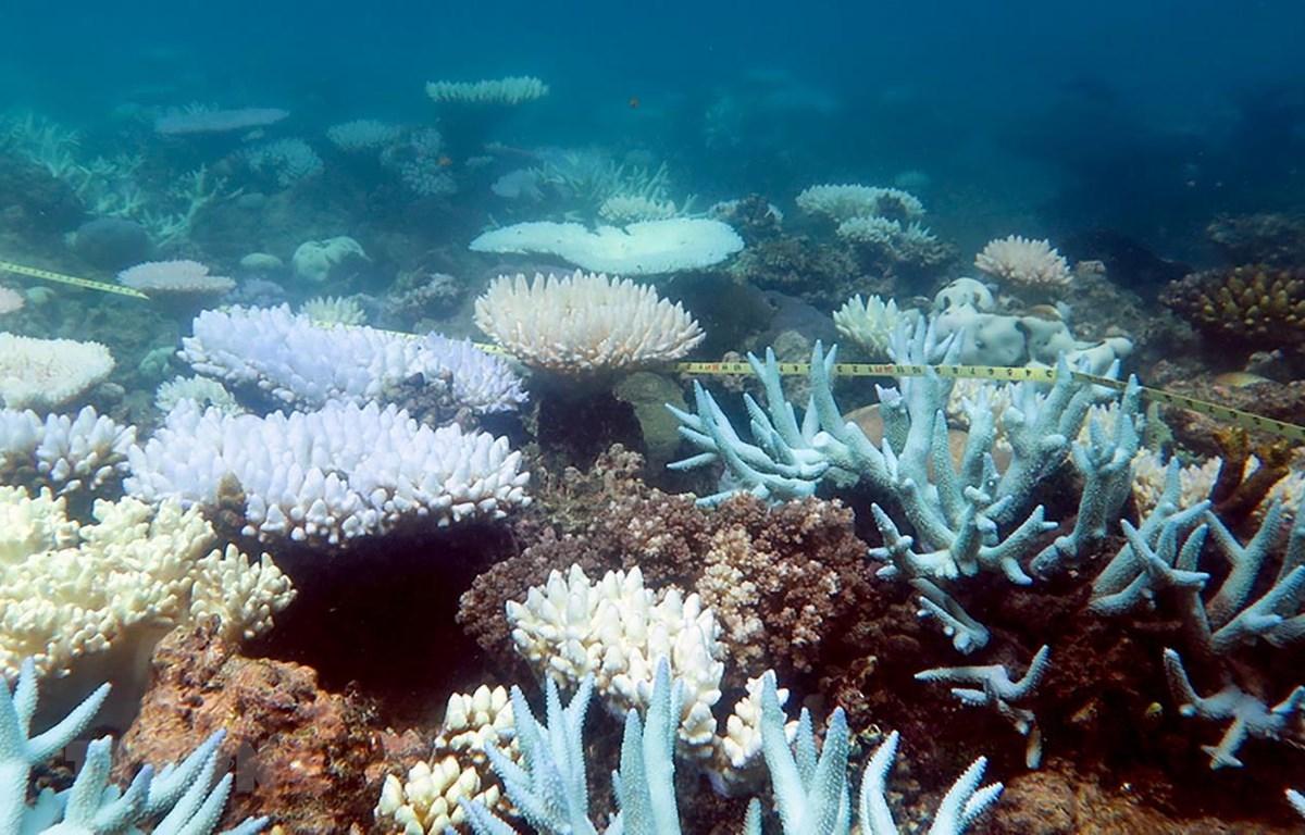 Rạn san hô Great Barrier tại Australia, ngày 19/4/2018. (Ảnh: AFP/TTXVN)
