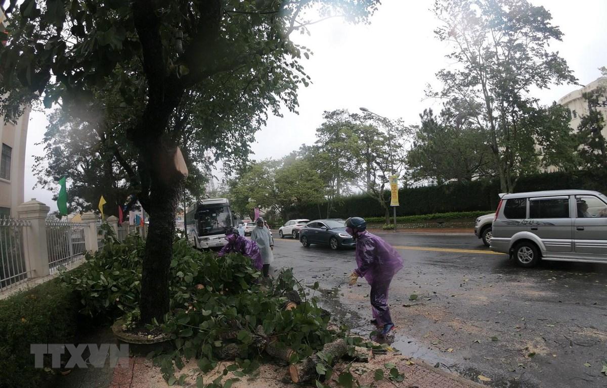 Gió lốc mạnh đã quật đổ 10 cây xanh, trong đó có nhiều cây thông bật gốc làm ảnh hưởng đến đường điện và nhà dân tại một số nơi của thành phố Đà Lạt. (Ảnh: Đặng Tuấn/TTXVN)