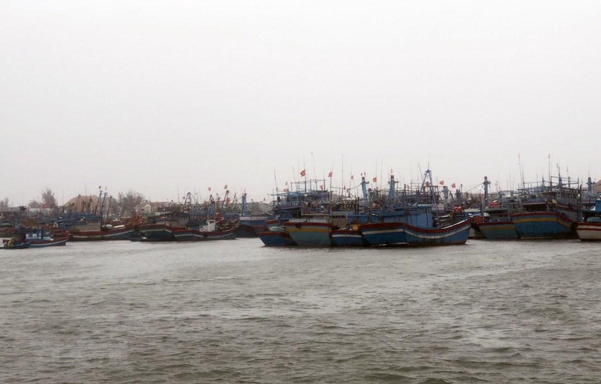 Khoảng 400 tàu thuyền đã vào neo đậu an toàn tại cảng cá Quy Nhơn vào sáng 30/10. (Ảnh: Nguyên Linh/TTXVN)