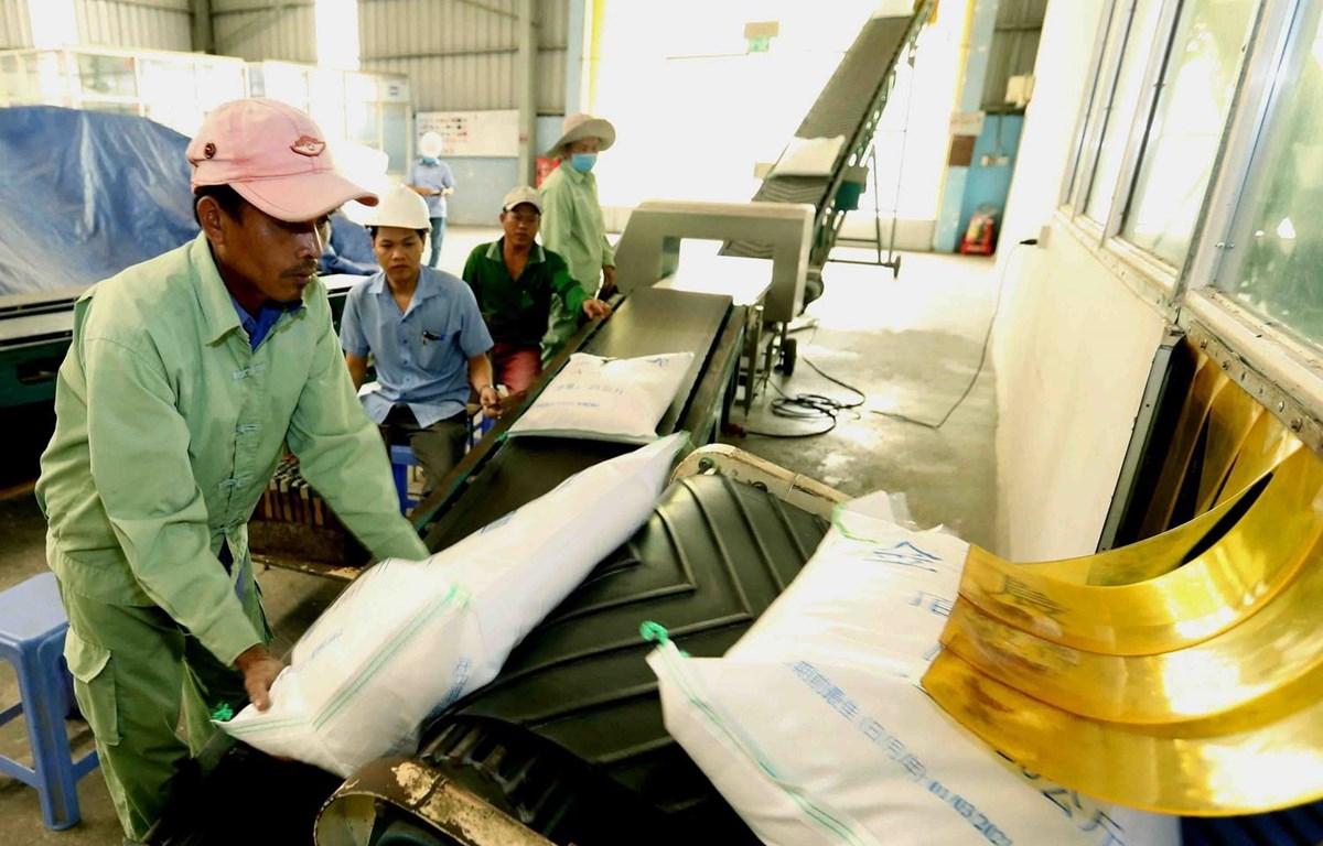 Lúa gạo là mặt hàng Việt Nam vốn có nhiều lợi thế cạnh tranh khi xuất khẩu sang EU. (Ảnh: TTXVN)