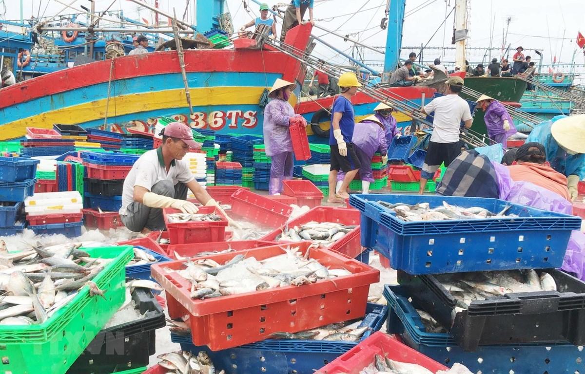 Hàng trăm tàu cá công suất lớn cập cảng Lạch Quèn ở xã Quỳnh Thuận, huyện Quỳnh Lưu, tỉnh Nghệ An, để trú bão và bán hải sản. (Ảnh: Nguyễn Oanh/TTXVN)