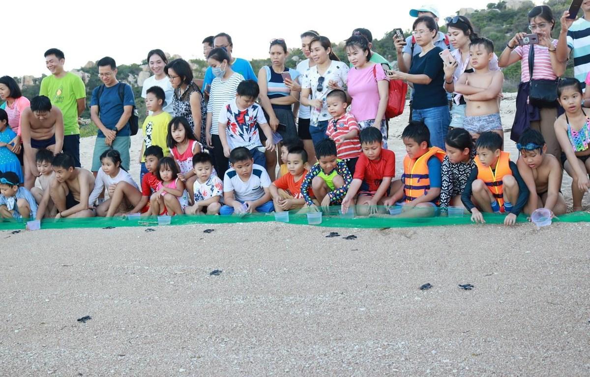 Học sinh tham gia thả rùa con về biển tại Vườn Quốc gia Núi Chúa ở tỉnh Ninh Thuận là hoạt động có ý nghĩa giáo dục lòng yêu thiên nhiên, nâng cao ý thức bảo vệ rùa biển. (Ảnh: Nguyễn Thành/TTXVN)