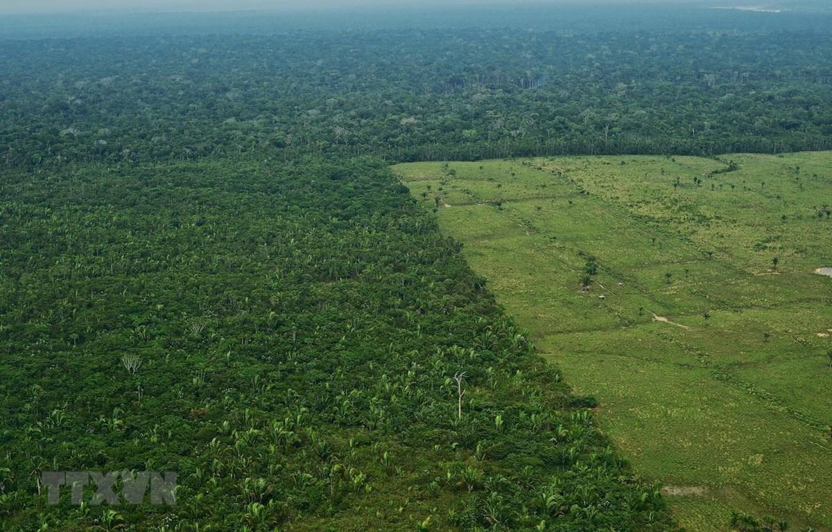 Rừng Amazon tại Brazil. (Ảnh: AFP/TTXVN)