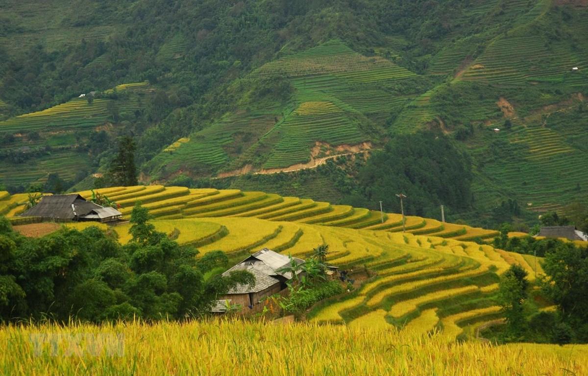 Ruộng bậc thang ở huyện Hoàng Su Phì, tỉnh Hà Giang, một địa chỉ du lịch hấp dẫn du khách. (Ảnh: Minh Tâm/TTXVN)