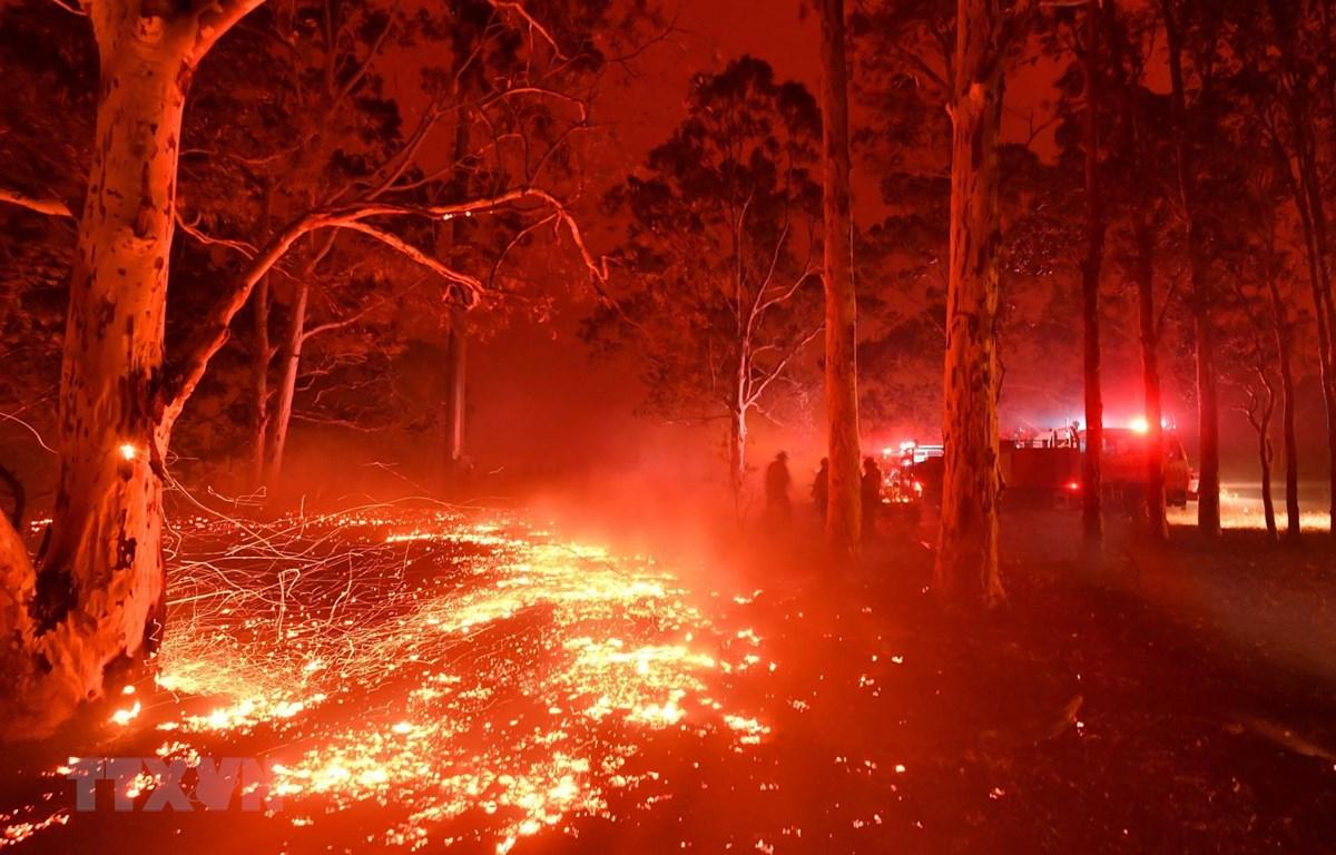 Hiện trường vụ cháy rừng tại New South Wales của Australia. (Ảnh: AFP/TTXVN)