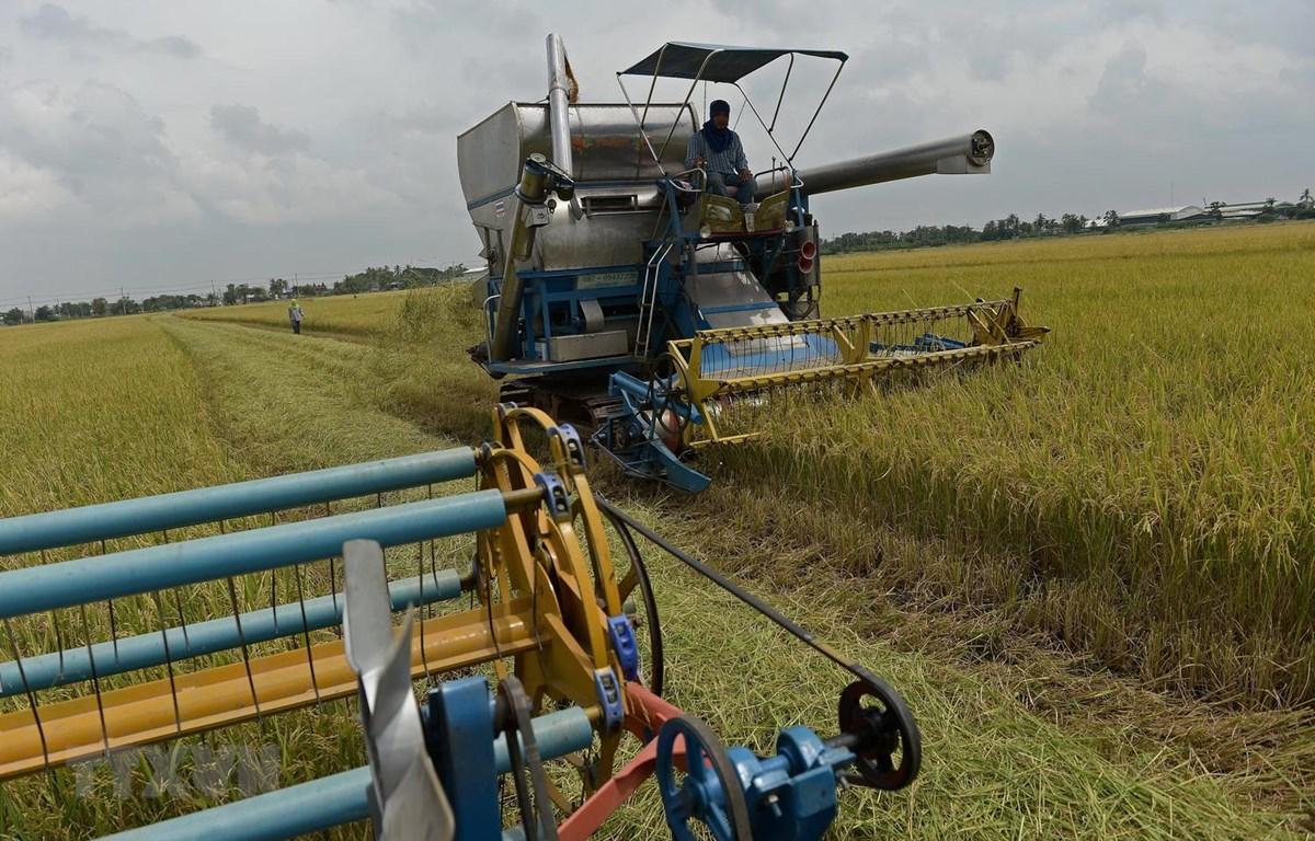 Nông dân thu hoạch lúa trên cánh đồng ở tỉnh Nakhon Pathom, Thái Lan. (Ảnh: AFP/TTXVN)