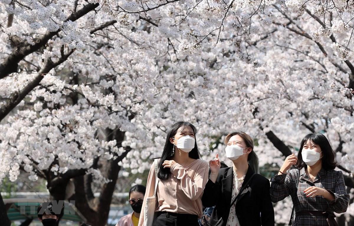 Người dân đeo khẩu trang phòng dịch COVID-19 tại Daegu, Hàn Quốc ngày 24/3 vừa qua. (Ảnh: THX/TTXVN)