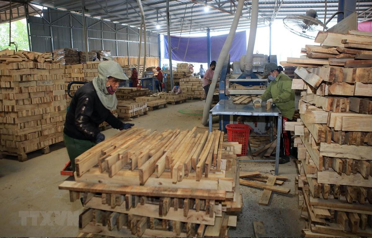Sản xuất ván ghép thanh tại một cơ sở chế biến gỗ rừng trồng trên địa bàn huyện Cam Lộ, tỉnh Quảng Trị. (Ảnh: Hồ Cầu/TTXVN)