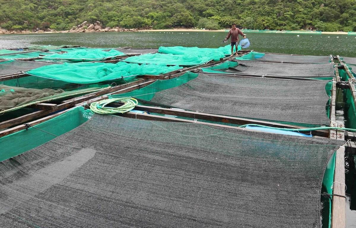 Bè nuôi tôm hùm của một hộ dân trên vịnh Vân Phong ở xã Vạn Thạnh, huyện Vạn Ninh, Khánh Hòa. (Ảnh: Nguyễn Dũng/TTXVN)