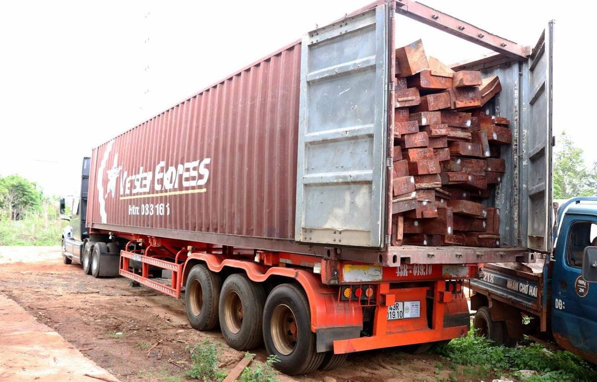 Một khối lượng lớn gỗ căm xe được chất lên xe container. (Ảnh: Quang Thái/TTXVN)
